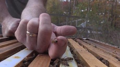 carrboro bees