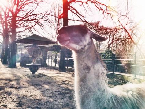 skeptical llama 2